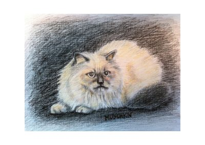 Debs Cat, colored pencil