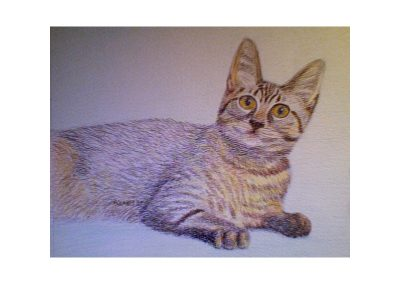 Lindalee's Cat 3