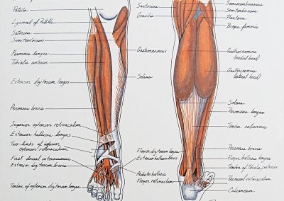 Lower Extremities Foot